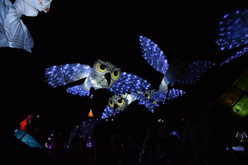 Owl lanters